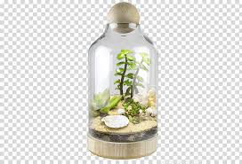 glass bottle bell jar cloche terrarium