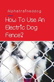 Training Your Dog Using A Petsafe Electric Dog Fence In 2020 Training Your Dog Dog Fence Dog Training