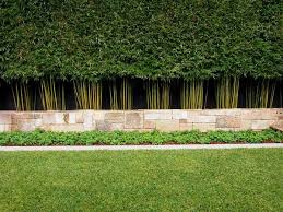 Privacy Plants A Living Fence For Your Outdoor Area Bamboo Landscape Bamboo Hedge Bamboo Plants