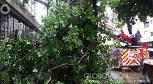 Árbol caído mantuvo cerrada avenida en El Bosque