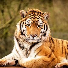 الحيوانات خلفيات حية For Android Apk Download