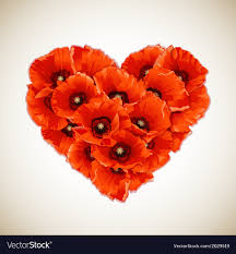 red poppies royalty free vector image