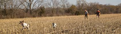 Gps Dog Trackers Dog Containment Garmin