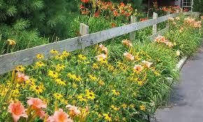 fence plantings gasper home garden