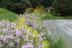 plants are the mulch' and other nature-based design wisdoms, with claudia  west - A Way To Garden