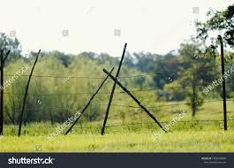 Cedar Stays Fallen On Barbed Wire Stock Photo Edit Now 1596530986