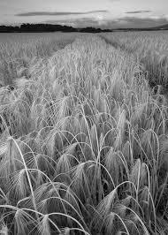 The Field #3 | Adam Fowler | Flickr