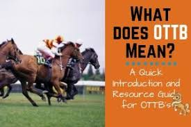 What Does Ottb Mean In The Horse World Helpful Horse Hints