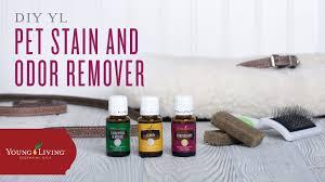 diy pet odor deodorizer with young