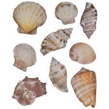 Sea Shell Stickers Hobby Lobby 964171