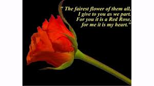 the rose quotes lovequotesmessages