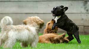 the best homemade dog repellent for