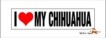 Amazon Com I Love Heart My Chihuahua Car Vinyl Bumper Sticker Decal Automotive