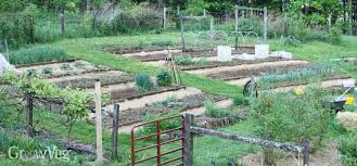 how to plan a vegetable garden a step