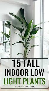 15 tall indoor low light plants indoor
