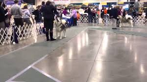 Novi expo dog show 2015 - YouTube
