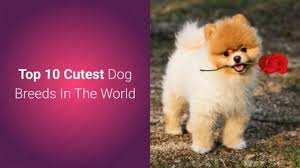 list of top 10 most cutest dog breeds
