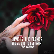 love is the flower you ve got to let grow john lennon quote