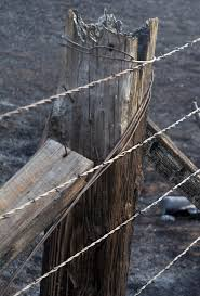 Study Shows Wildfire Does Not Damage Barbed Wire Agrilife Today
