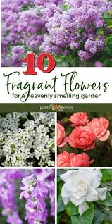 10 fragrant flowers for a heavenly