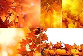 pumpkin and leaves autumn wallpaper