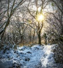 Snowy Morning at Perry Wood, Worcester - License, download or print for  £12.40 | Photos | Picfair