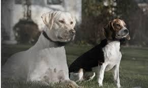 In Ground Fencing Sportdog Canada