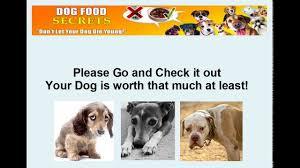 make homemade dog food for chihuahuas