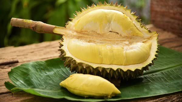 """durian meyvesi ile ilgili görsel sonucu"""""""