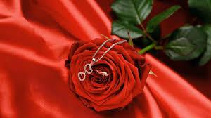 اجمل خلفيات ورد جوري احلى الورود من تجميعي 2015 Beautiful Roses