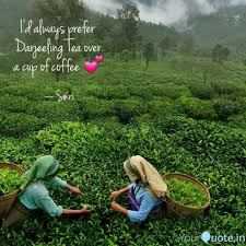 best darjeeling quotes status shayari poetry thoughts yourquote