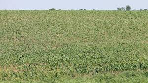 Iowa crops planted quickly, but growth slows | Agriculture | qconline.com