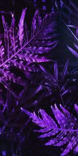 43 ideas flowers purple wallpaper