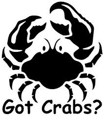Got Crabs Vinyl Decal Sticker Car Window Bumper Funny Lol Std Prank Sand Boat For Sale Online