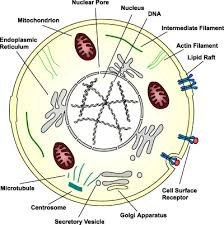 genetic material an overview