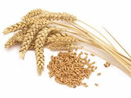 kretschmer wheat germ nutrition facts