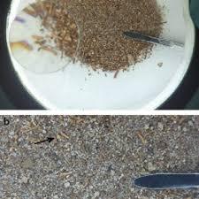 pdf quinoa a millenary grain in