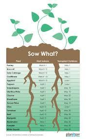 transplant seedlings plants edible garden
