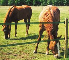 Electric Fencing Fieldguard Electric Fences For Horses And Other Animals