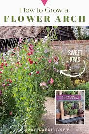 grow a sweet pea garden arch empress