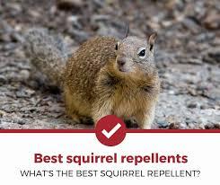 top 5 best squirrel repellents 2020