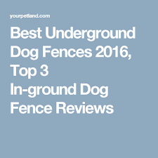 Best Underground Dog Fences 2016 Top 3 In Ground Dog Fence Reviews Wireless Dog Fence Dog Fence Dog Training Come