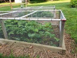 prevent rabbit damage in the garden
