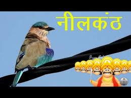 neelkanth bird न लक ठ indian roller