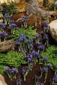77 best garden show ideas images in