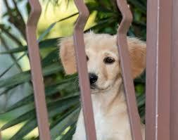 Dog Puppy Pet Free Photo On Pixabay