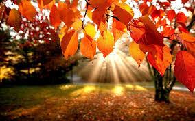 desktop wallpaper autumn leaves 65