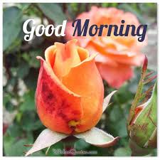 200 sweet good morning messages with