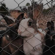 Animal Fencing Pet Mesh Fences Quick Delivery Wire Fence