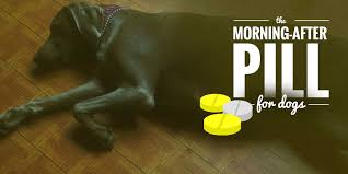 the morning after pill for dogs